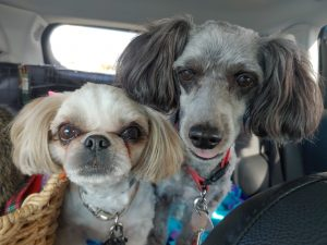 Gris & Trixie